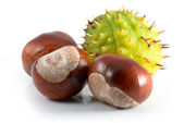 Chestnut — Stock Photo
