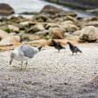 Seagull on sandy beach — Stock Photo #19736881