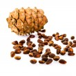 Cedar pine cones with nuts isolated on white background — Stock Photo #49785263