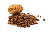 Cedar pine cones with nuts isolated on white background — Stock Photo