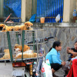 Puppies in an cage for sale in Vietnam — Stok fotoğraf