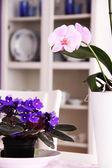 Decoraties in de eetkamer — Stockfoto