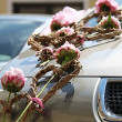 Stock Photo: Floral decoration on wedding car