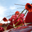 Floral decoration on wedding car — Stock Photo #18410931