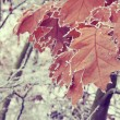 Frozen leaves — Stock Photo #32238147