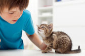 My kitten has fleas — Stock Photo