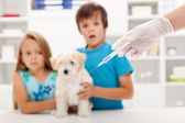 Kids at the veterinary doctor with their pet — Stock Photo