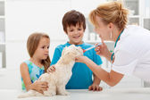 Kids with their pet at the veterinary doctor — Stok fotoğraf