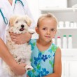 Stock Photo: Taking my doggy to veterinary