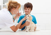Boy at the veterinary with his dog — Stock Photo
