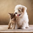 Best friends - kitten and small fluffy dog — Stock Photo #19146845