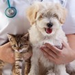 Little dog and cat at veterinary — Stock Photo #19146861
