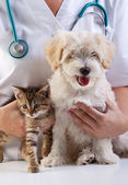 Little dog and cat at the veterinary — Stok fotoğraf