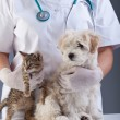 Animal doctor closeup with pets — Stock Photo #25388201
