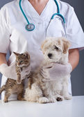 Animal doctor closeup with pets — Stock Photo