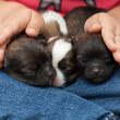 Стоковое фото: Young puppy dogs sleeping protectected