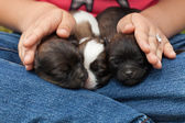 Young puppy dogs sleeping protectected — Stok fotoğraf