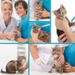 Little kitten at the veterinary collage — Stock Photo