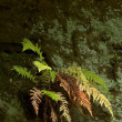 Fern on a rock - Stock Photo