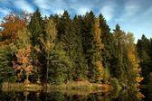 用石头河秋天的树木由水 — 图库照片