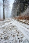 Forest road — ストック写真