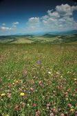Flowery meadow — Foto Stock