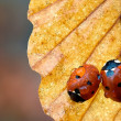 Stock Photo: Ladybird