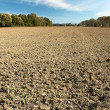 Stock Photo: Landscape of arable cultivation