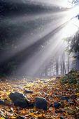 Sunlight in the fog — Stock Photo