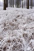 çimenlerin üzerinde hoarfrost — Stok fotoğraf