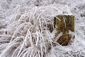 Hoarfrost on grass — Stock Photo