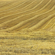 Mown cornfield — Stock Photo #40370261