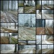 Stock Photo: Forest roads