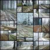 Orman yolları — Stok fotoğraf