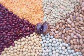 Legumes — Stock Photo