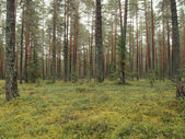 Trees in forest — Stock Photo