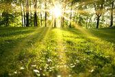 Jarní les — Stock fotografie