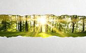 Yırtılmış kağıt — Stok fotoğraf