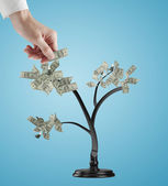 Hand creates dollars tree — Stock Photo