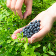 Womans hand with blueberries — Stock Photo #12068135