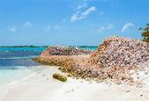 Mountains of shells — Stock Photo