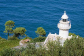 Lighthouse at the sea coast with vegetation — Stockfoto