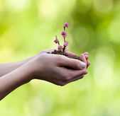 Farmer hands holding branch with flower background — Stock Photo