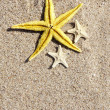 Summer background with starfish — Stock Photo