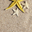 Stock Photo: Summer background with starfish
