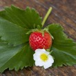 Strawberry, flower and strawberry leaf — Stock Photo