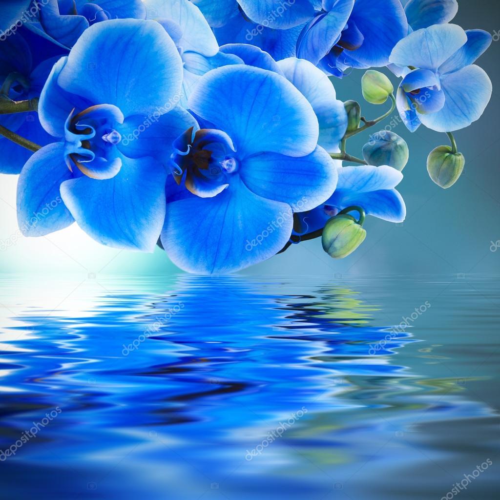 Sfondo orchidea blu con riflesso nell 39 acqua foto stock for Orchidea acqua