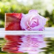 Rose flower with reflection — Stock Photo