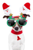 χριστούγεννα σκύλος — Φωτογραφία Αρχείου