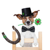 Chimney sweeper dog — Stock Photo